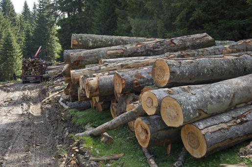 ASIGURAREA SILVICĂ – un instrument eficient de educare, prevenire și protejare atât a fondului silvic, cât și a mediului înconjurător