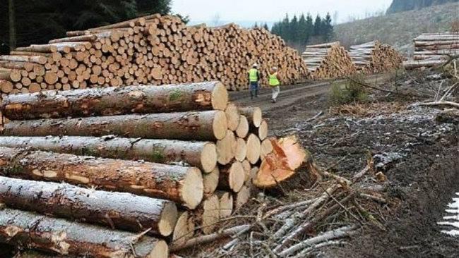 Haosul din mintea demnitarilor! Legile pădurii se anulează una pe cealaltă