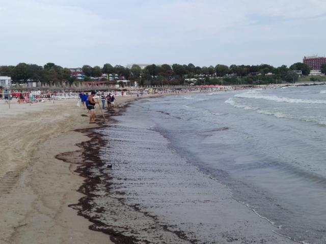 Poluare cu petrol la Mangalia